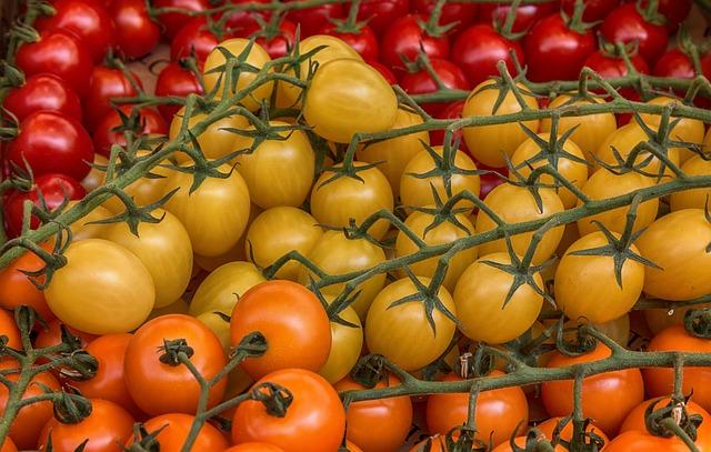 Red Yellow Orange Tomatoes for pasta sauce